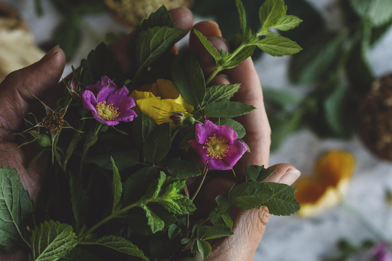 Hands holding wild roses