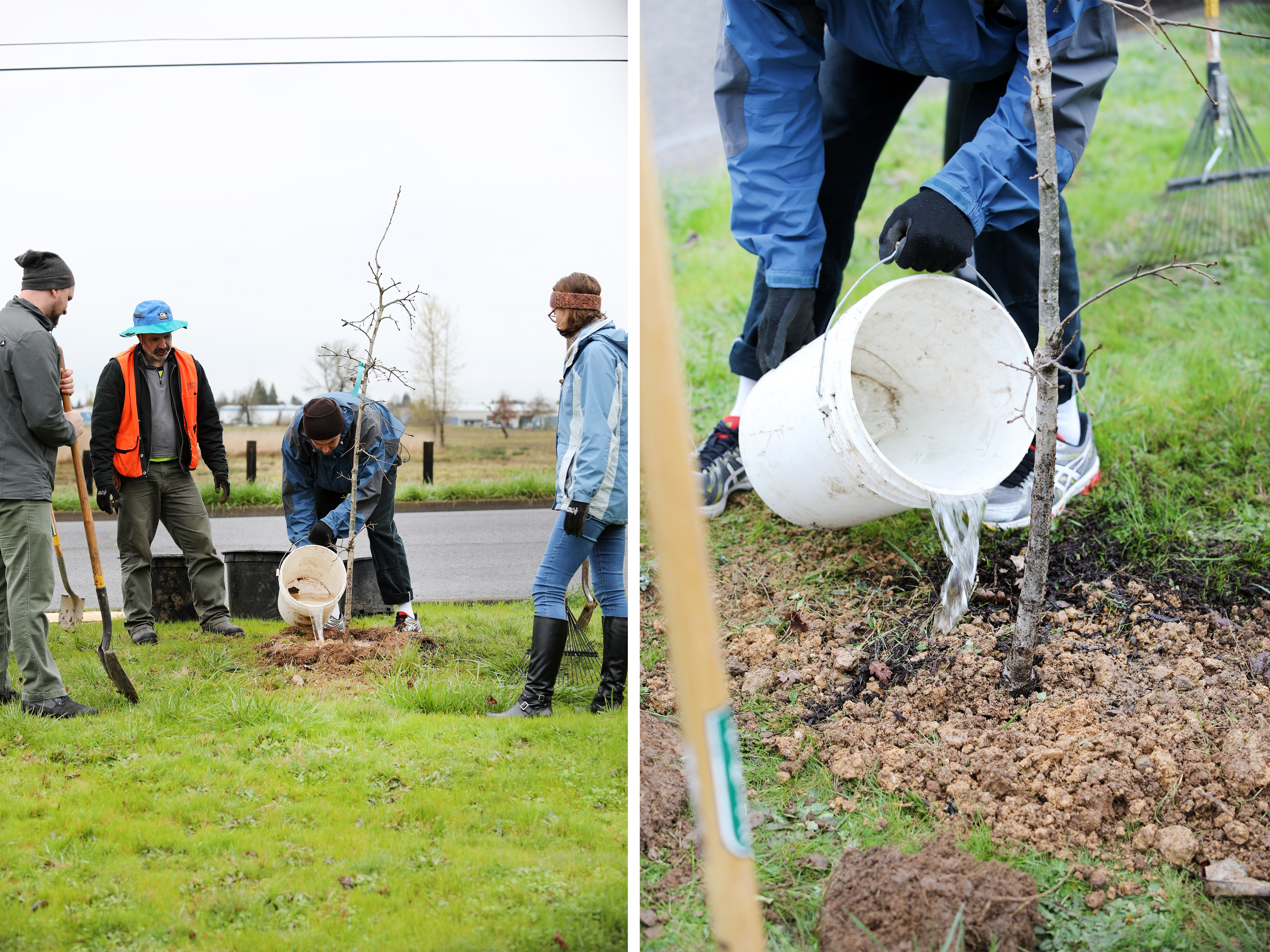 People planting and watering trees near open field