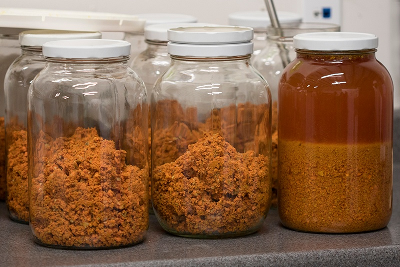 Raw turmeric in jars for making tinctures