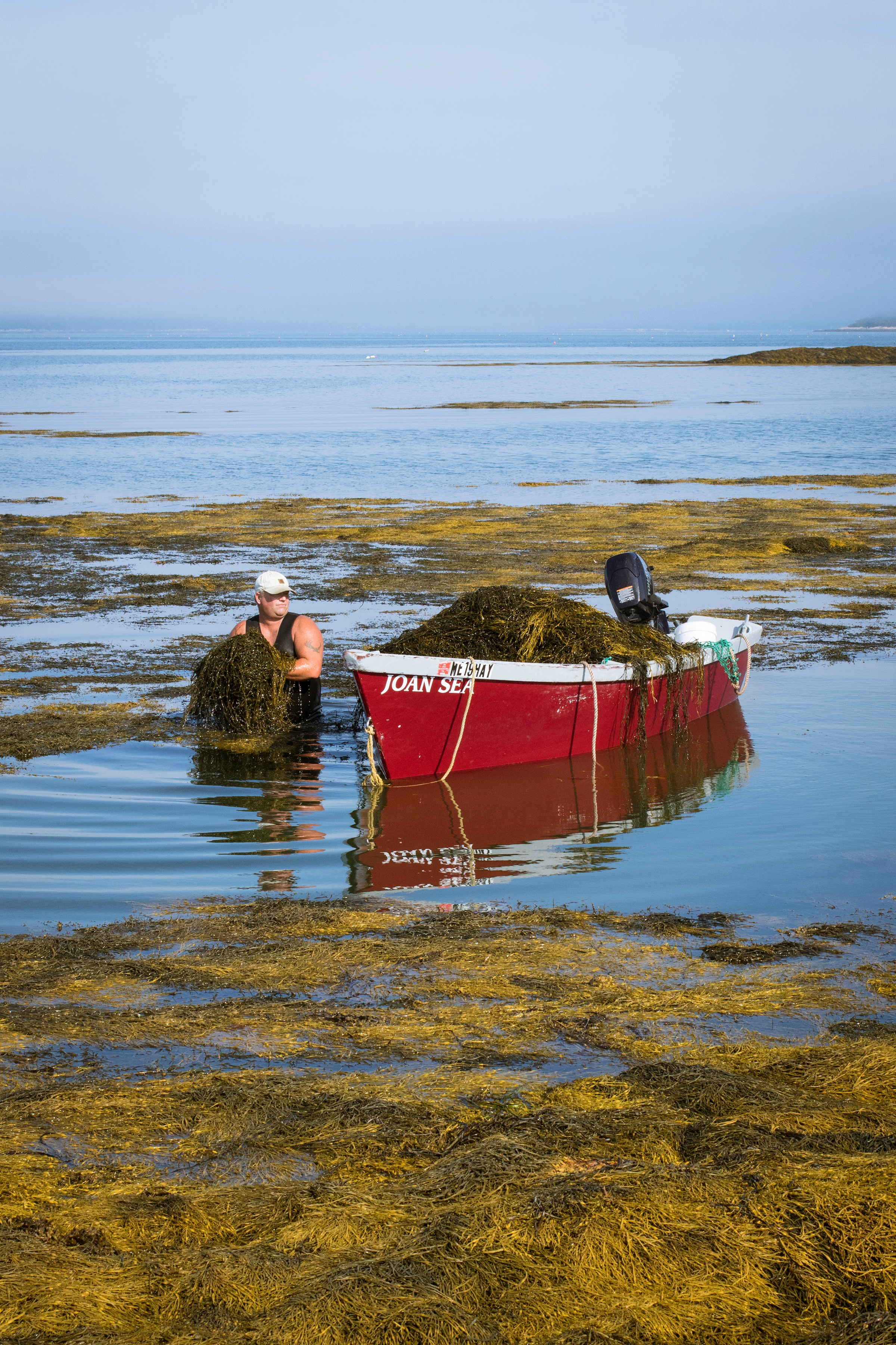 Seaweed harvester out in the water hauling seaweed onto boat