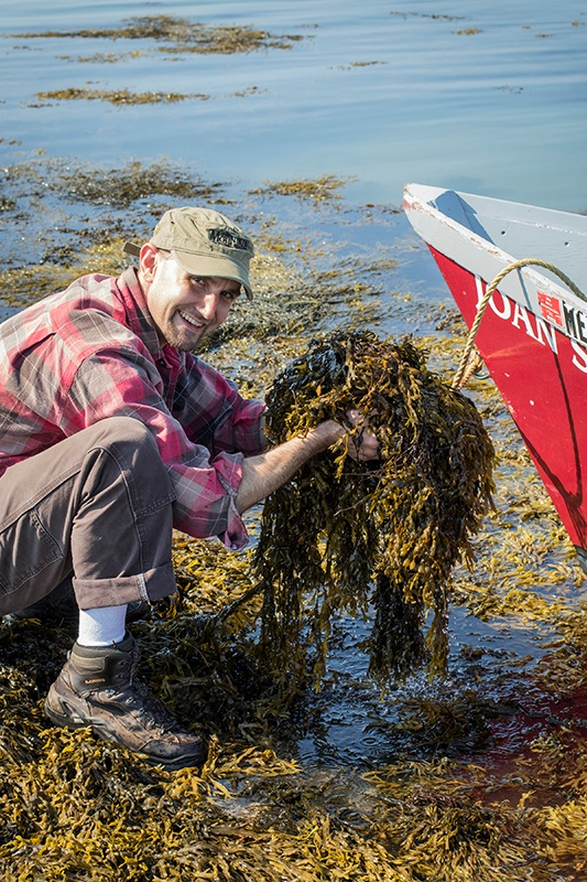 Man crouching down near water and holding bladderwrack to carry into boat