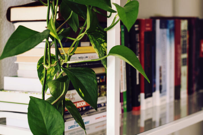 Bookshelf full of resource texts on medical advice and herbalism. Hanging vine in the foreground.