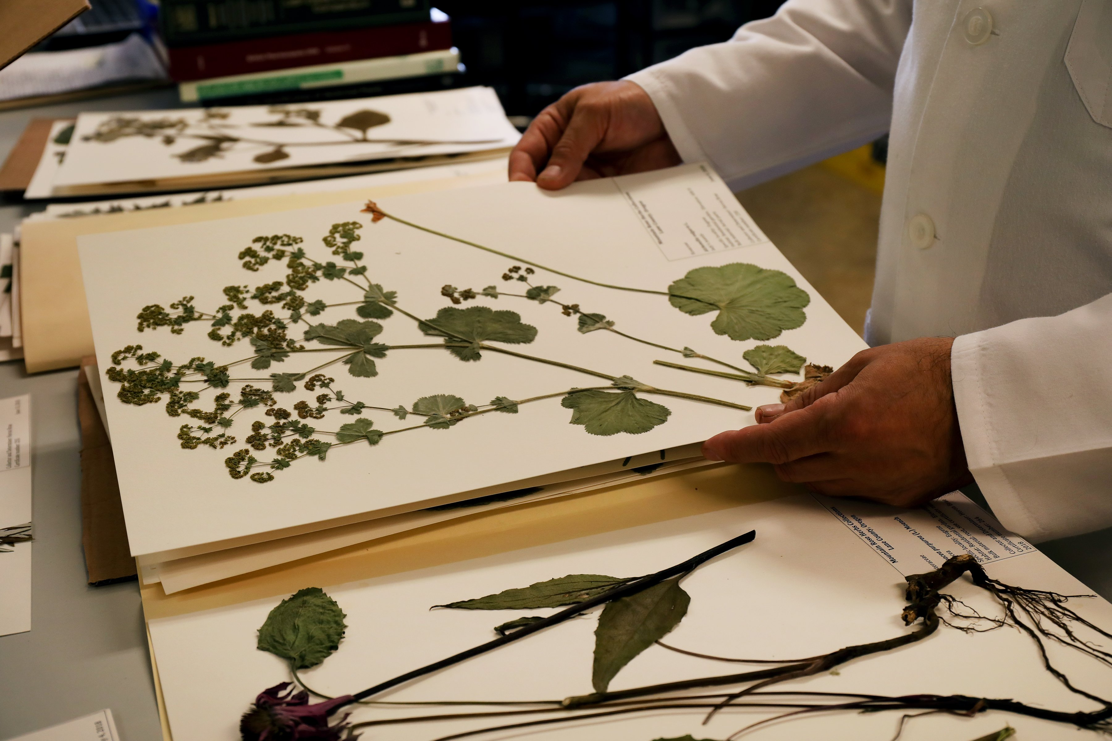 Botanical reference libraries are tools to help with identifying and confirming species of different botanicals.