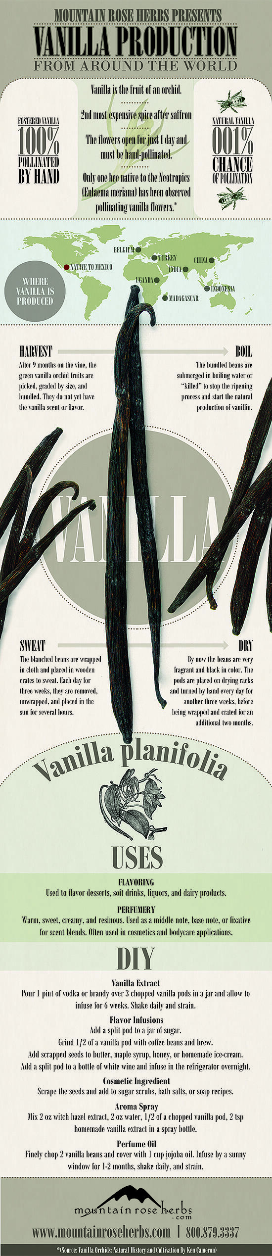 vanilla infographic.jpg
