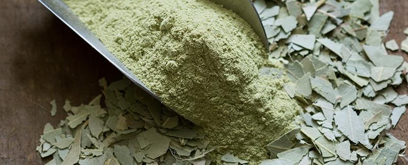 New in the Shop: Organic Eucalyptus Leaf Powder