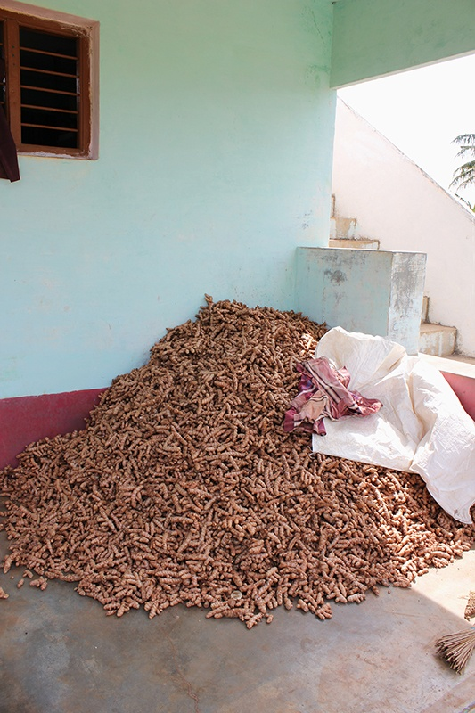 Pile of freshly harvested organic, fair trade turmeric in India farming village.